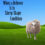 When a Believer Is in Sheep-Shape Condition